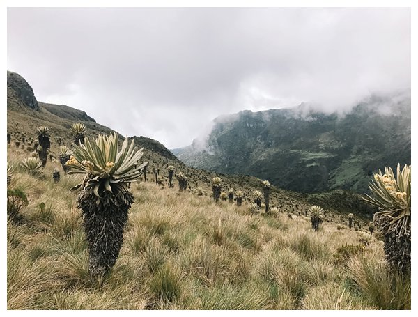 oh-belle_reisfotografie_reisfotos-colombia_fotografie-colombia_fotografia-colombia_travelphotography_0185 Reizen door Colombia