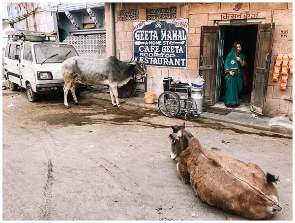 ohbelle_reisverslag-india_india-reis_varanasi-reizen_reisfotograaf_holi-festival-india_holi-festival-delhi_0025 Reizen door India