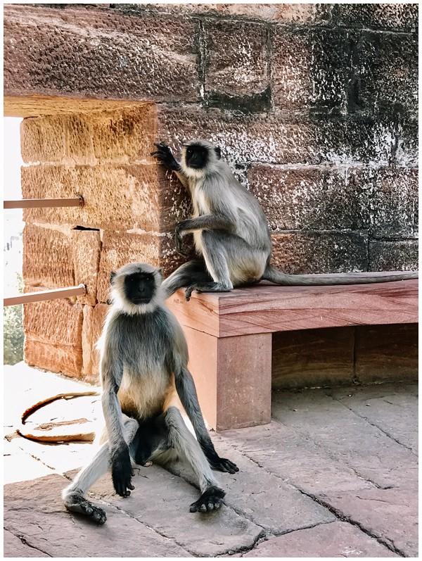 ohbelle_reisverslag-india_india-reis_varanasi-reizen_reisfotograaf_holi-festival-india_holi-festival-delhi_0032 Reizen door India
